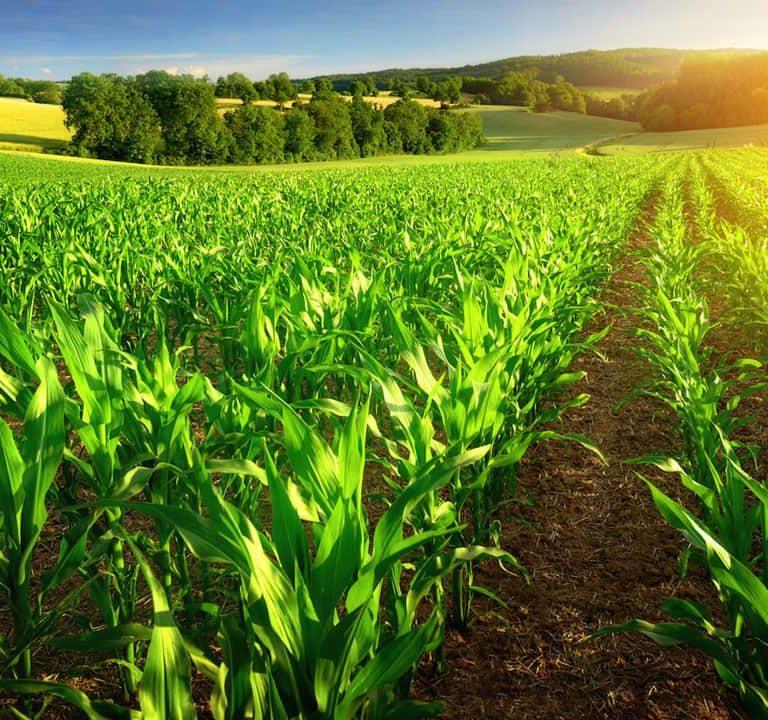 The Farming Season